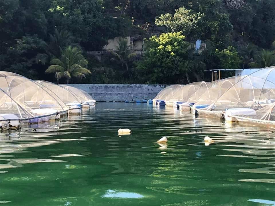 Tilapia fish farms of Ilopango Lake