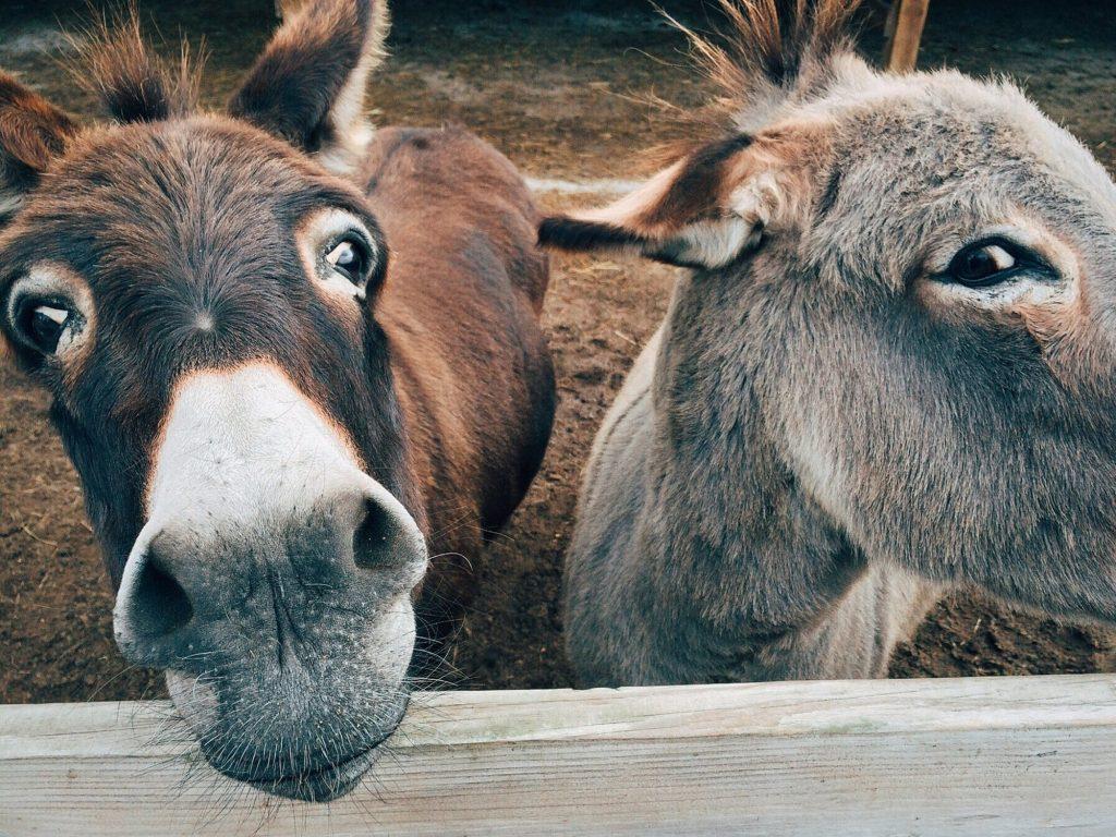 travel blogging sucks donkey