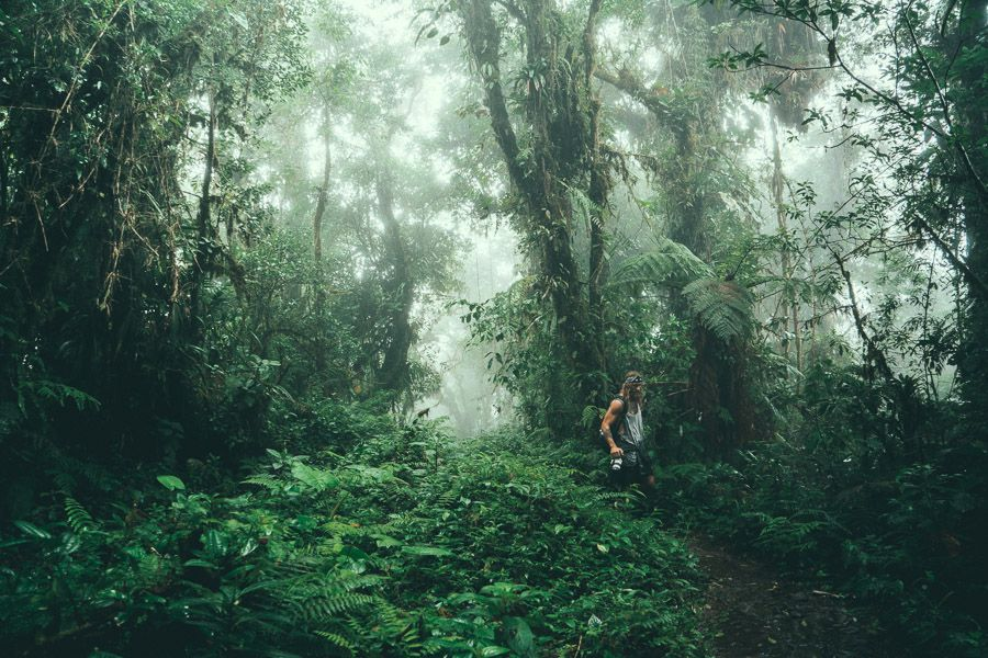 Nobody Walks Off-Trail Into The Jungle Wearing Shorts