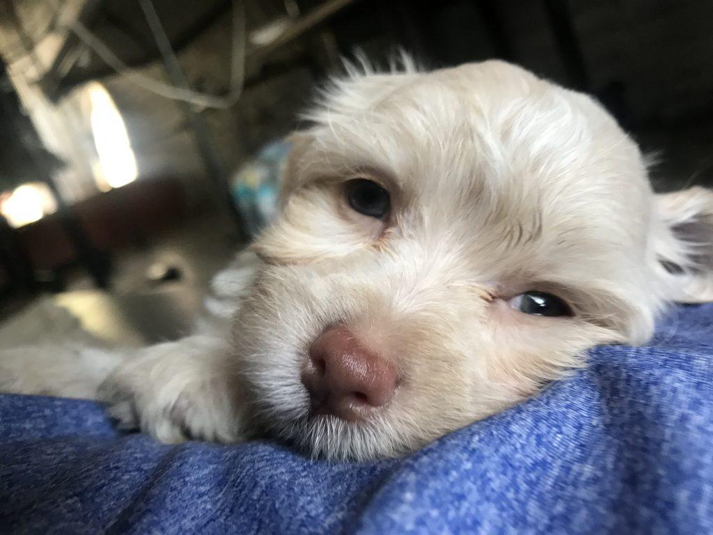 Adorable Dog Guilt