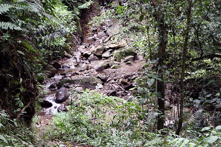 El Pianista Trail Panama
